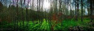 Forest Pano by Famvlvs