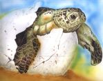 Turtle by devil-undercover