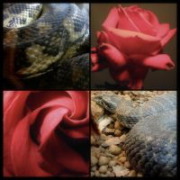 Snake and Rose by kayne
