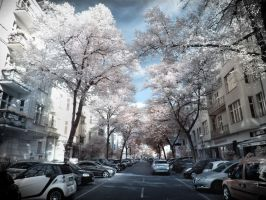Berlin Mommsenstrasse Infrared by MichiLauke