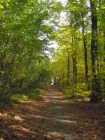 Foresty Trail II by simfonic
