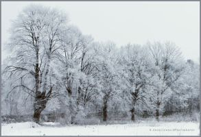 Trees in the rime frost by swiftach