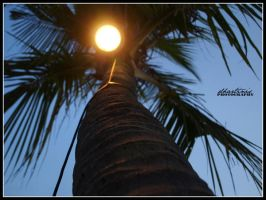 Light Palm by dhartinis