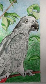 African grey parrot cover by Ceril91