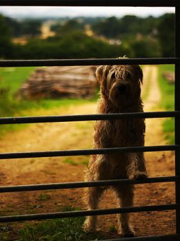Dog in the Cotswolds by younghappy