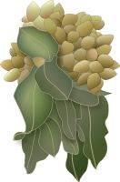 Pistachio cluster vector by Owhl-stock