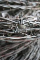 Barbed Wire Again by ThisDay