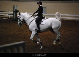 Gray Canter (5) by aipstock