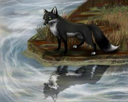 Leven - black fox at river by WolfScribe