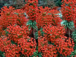 Red Euphorbia Stereoscopic Sexton Blake Painting by aegiandyad