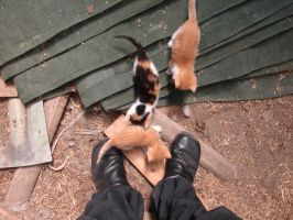 Furballs and my shoes by Westerfarmer