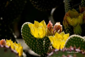 Spring Yellow by DavidMCoyle