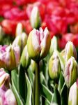 Ready to bloom by AnNacht