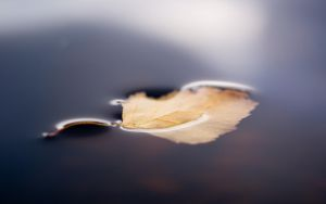 Leaf by Henrikson