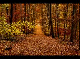 Autumnal road by JoInnovate