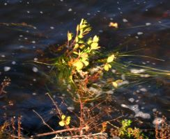 Plant in Water by DiamondLeaf