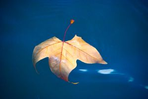 Floating Leaf 2 by Noemy009