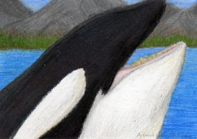 ACEO Orca Whale by 8TwilightAngel8