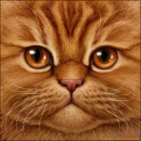 Red Tabby Persian Cat by Wynnyelle