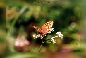 Butterfly effect by DuendeGotico