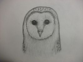barn owl by kakashi9119