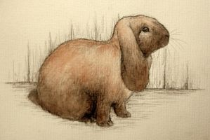 french lop by moussee