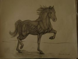 horse fully rendered by spanishartist