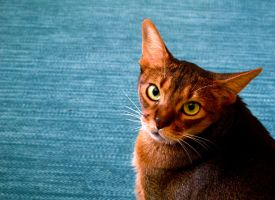 Copper Cat II by SuKedi
