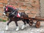 A clydesdale harnessed in a cart by mojcaj