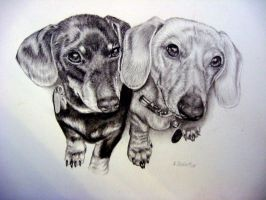 Oscar and Zoey- Dachshunds by xx-ashley