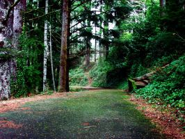 Shively park trail by StopShootingM3