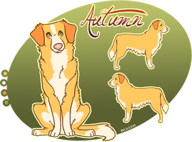 x_. Autumn the Duck Toller by srspibble