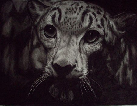 Snow Leopard by Lalita17