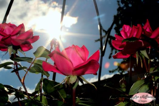 Nothing but sun and roses by lisahuffman2001