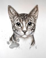 Squirt the tabby! by RozThompsonArt