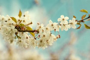 bring on the blossoms by FDLphoto