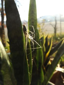 Spider web halloween spooky plants photography by sillybunnns