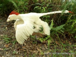 Albino Microraptor 2 by Book-Rat