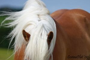 abstract haflinger by MissToseland