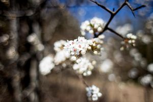 Blurred Blossoms by RobertRobledo