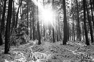 Winter and Sun by KoljaNa