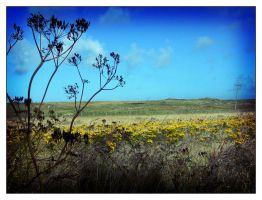 FLOWERS AND FIELDS OF TIREE 2 by rosebud10