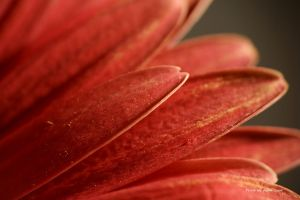 Red flakes ... by AgataSwat