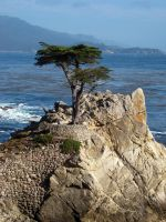 The Lone Cypress by iainhallam