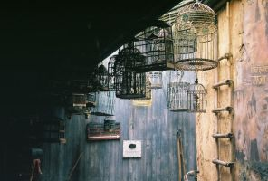 cages by Chebi