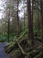 Tongass National Forest 8 by ShadowsStocks