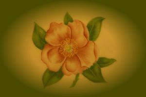 Painted Plate by digitalpix4all