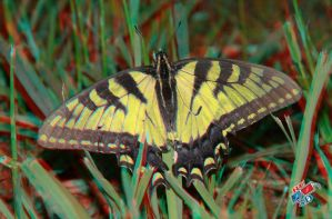 Anaglyph-Flutterby by redtailhawker