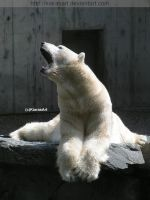 polar bear posing II by KIARAsART