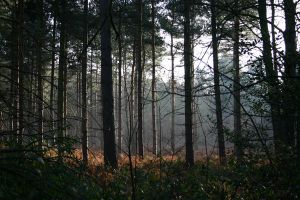 woods_37 by Appletreeman-Stock